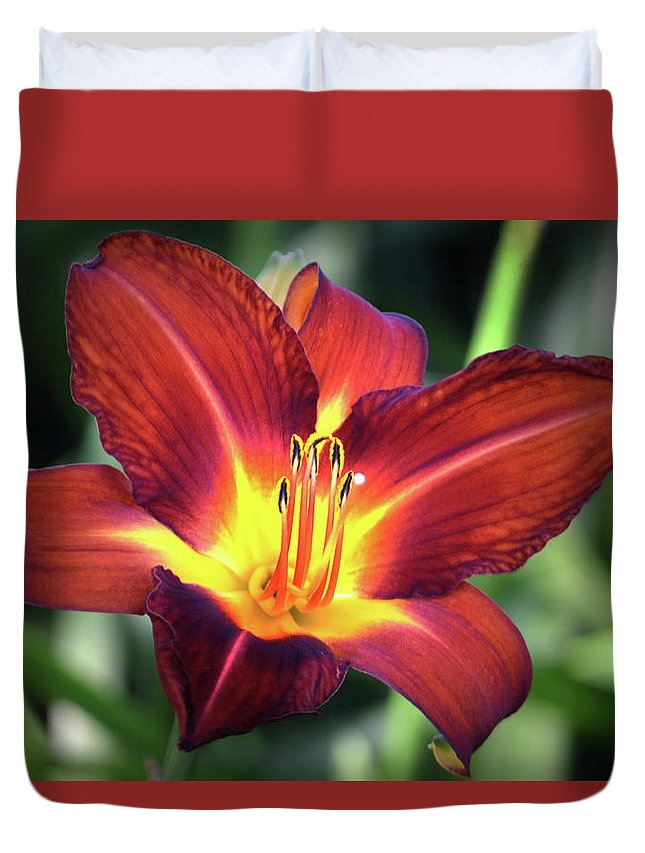 Lily Duvet Cover featuring the photograph Red Volunteer. by Terence Davis