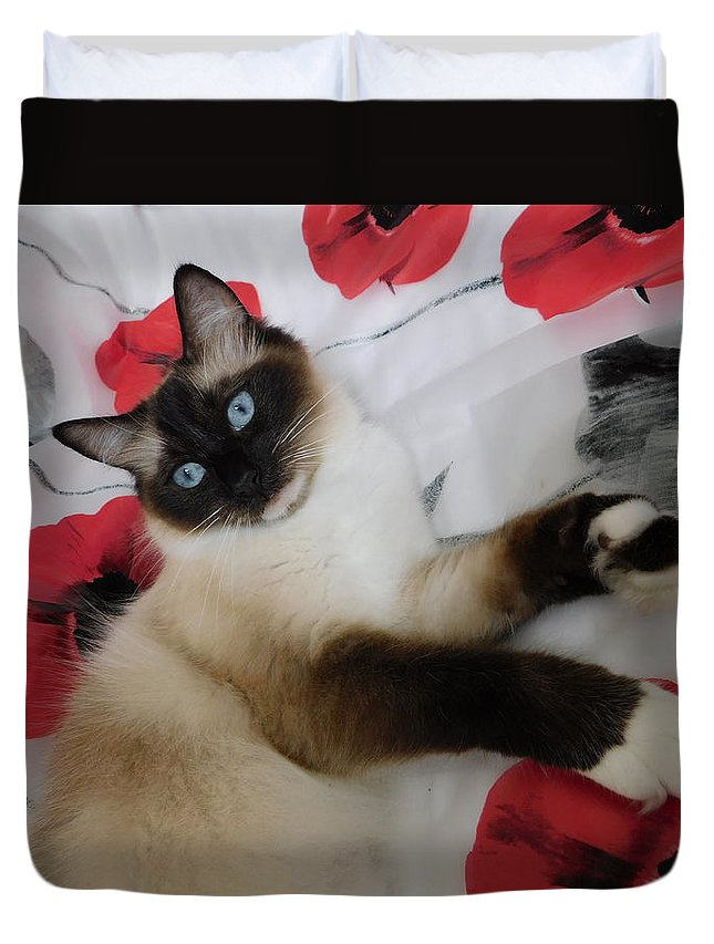 Red White And Ragdoll Kitty Cat Silktapestrykittenstm Calendars Greeting Cards Book Covers Blue Eyes Cats Duvet Cover featuring the photograph Red White And Ragdoll Kitty Cat Silktapestrykittenstm by Pamela Benham