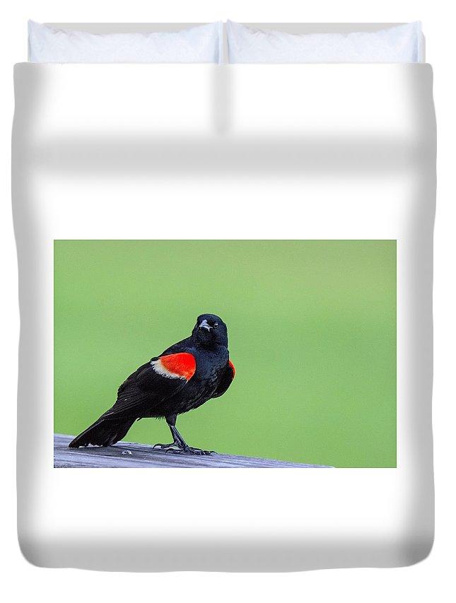 Blackbird Duvet Cover featuring the photograph Red Wing Blackbird by John Ruggeri