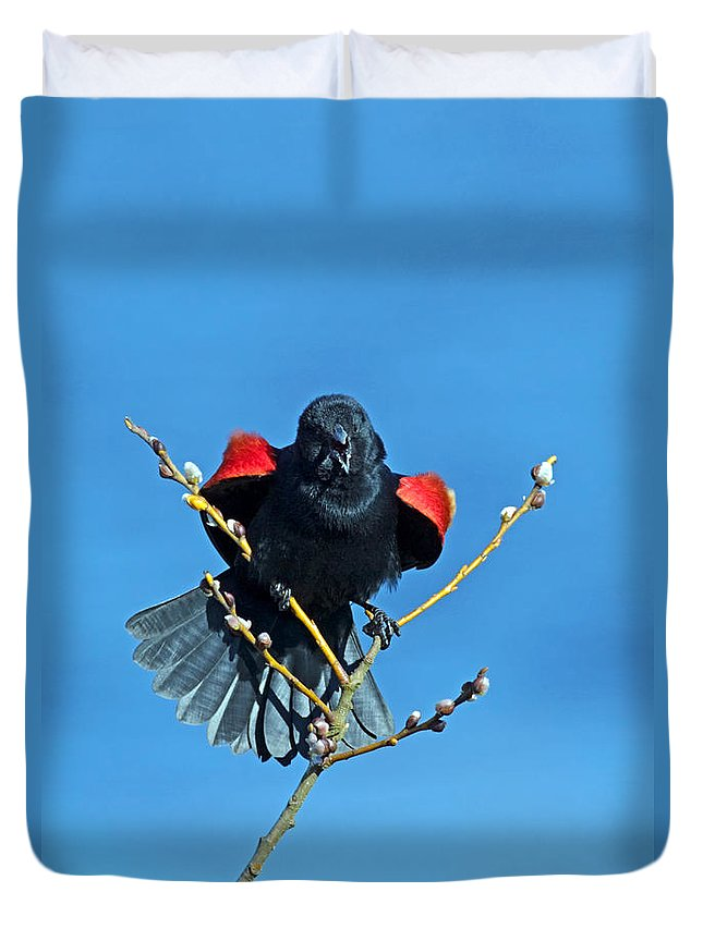 Red-winged Blackbird Duvet Cover featuring the photograph Red-winged Blackbird by Randall Ingalls