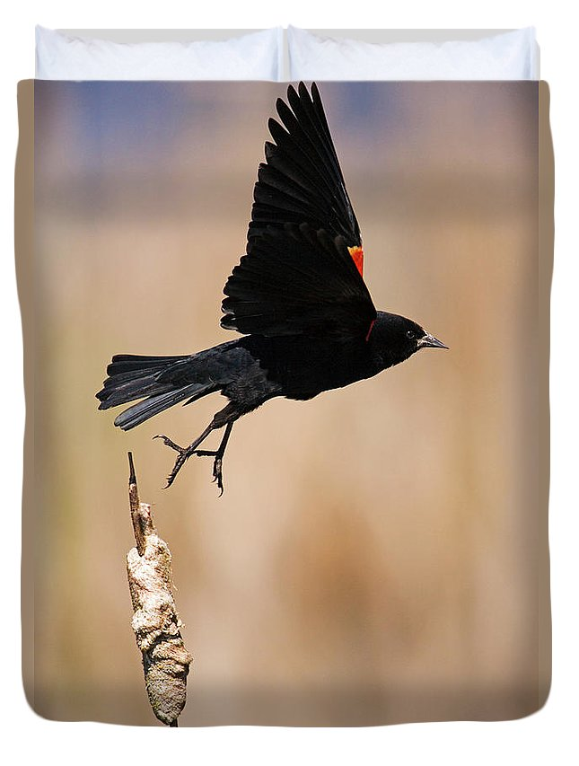 Red-winged Blackbird Duvet Cover featuring the photograph Red-winged Takeoff by Randall Ingalls