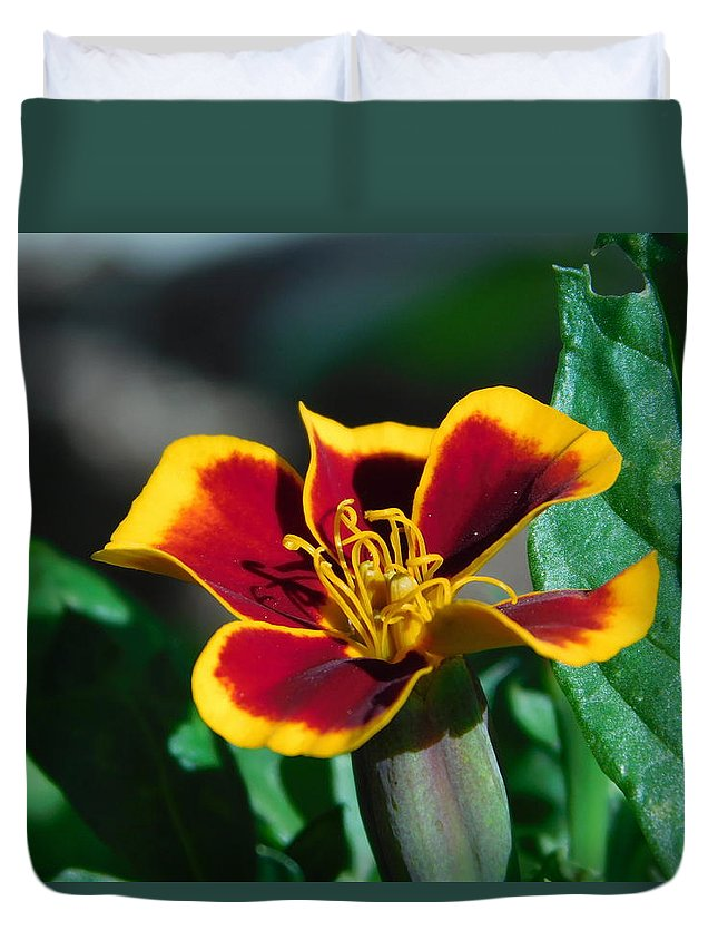 Duvet Cover featuring the photograph Red/yellow Side View 4-24-16 by Maurine DeVries