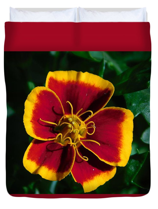 Duvet Cover featuring the photograph Red/yellow Flower 4-24-16 by Maurine DeVries