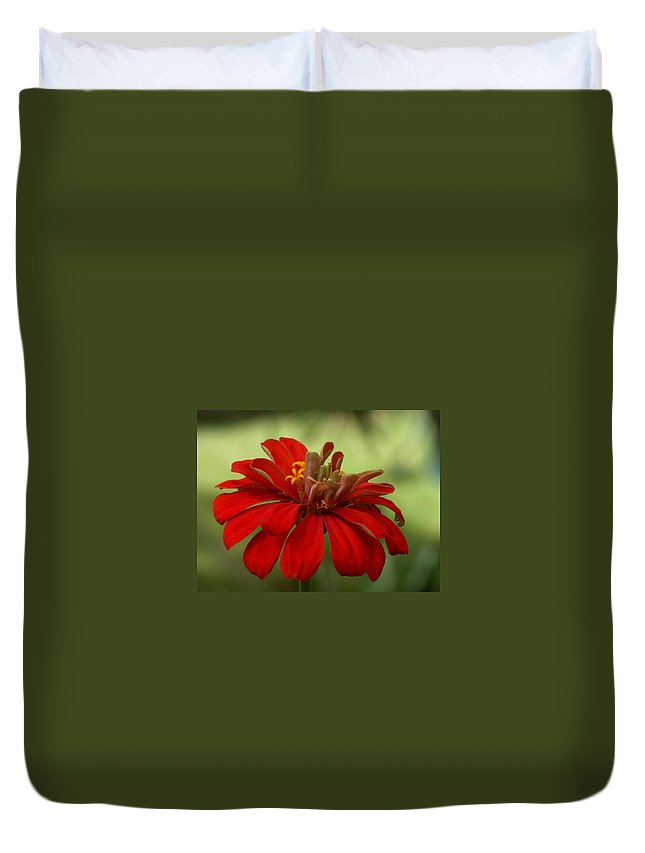 Zinnia Duvet Cover featuring the photograph Red Zinnia by Racquel Morgan