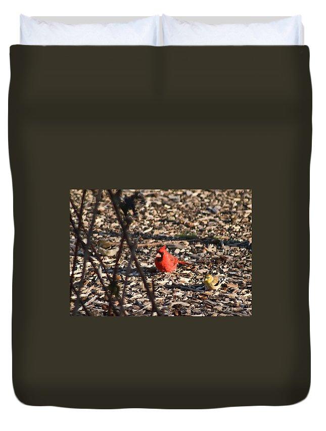 Redbird Duvet Cover featuring the photograph Redbird And American Golden Finch by Douglas Barnett
