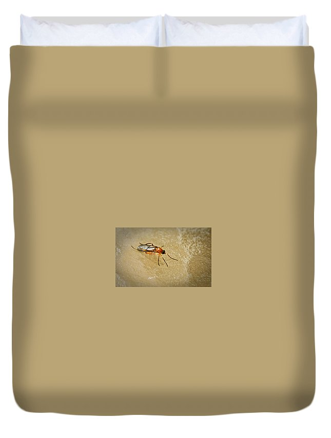 Fly Duvet Cover featuring the photograph Redfly With Black Eyes by Douglas Barnett