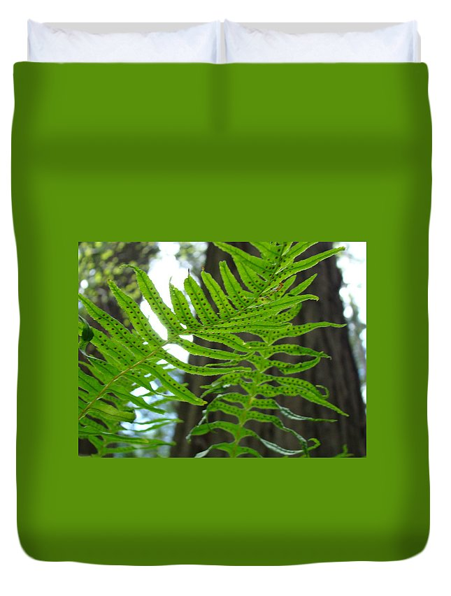 Fern Duvet Cover featuring the photograph Redwood Forest Ferns Art Prints Sunlit Fern Baslee Troutman by Baslee Troutman