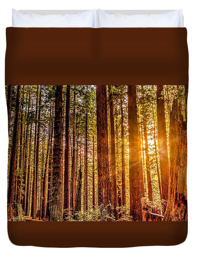 Redwoods Duvet Cover featuring the photograph Redwood Forest by Jeffrey Schwartz