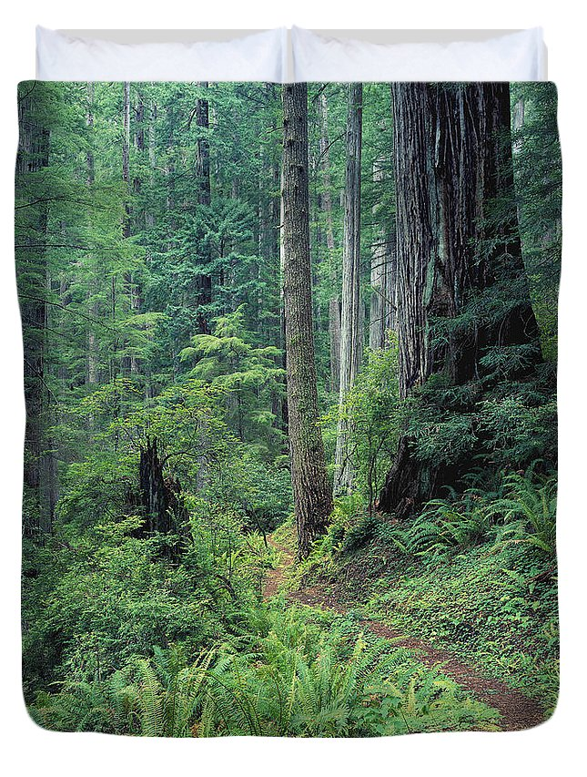 Afternoon Duvet Cover featuring the photograph Redwood Park Trail by Greg Vaughn - Printscapes