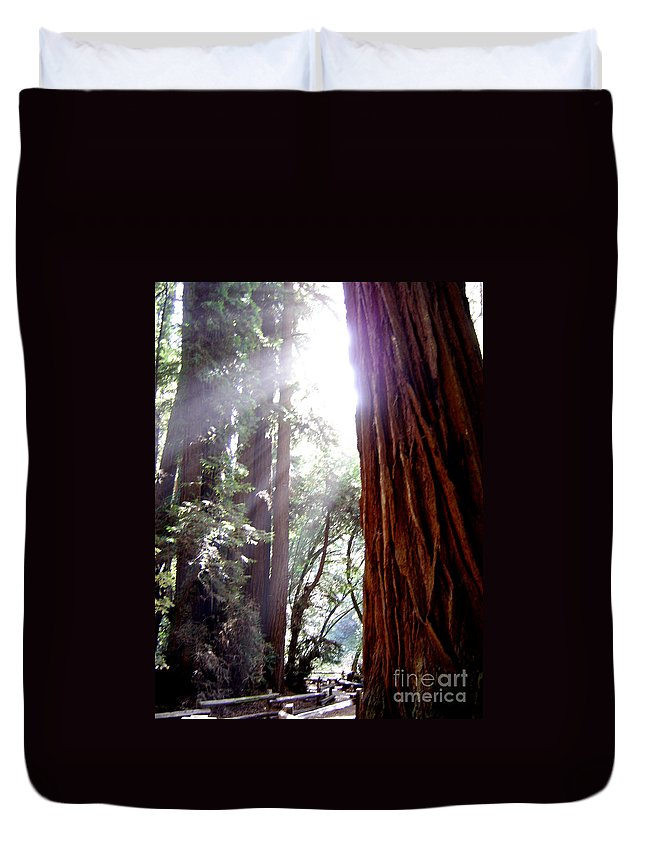 Redwoods Duvet Cover featuring the photograph Redwood Sunlight by Mary Rogers