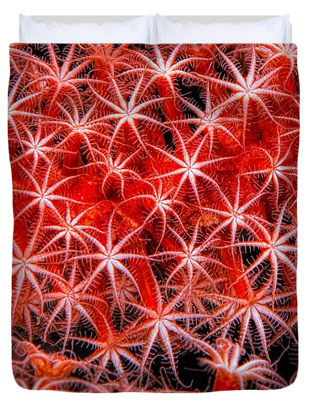 Reef-art Duvet Cover featuring the photograph Reef Art - Octocoral by Henry Jager