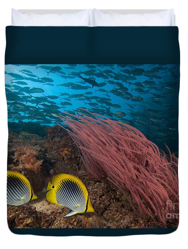 30-csm0259 Duvet Cover featuring the photograph Reef Scene, Malaysia by Dave Fleetham - Printscapes
