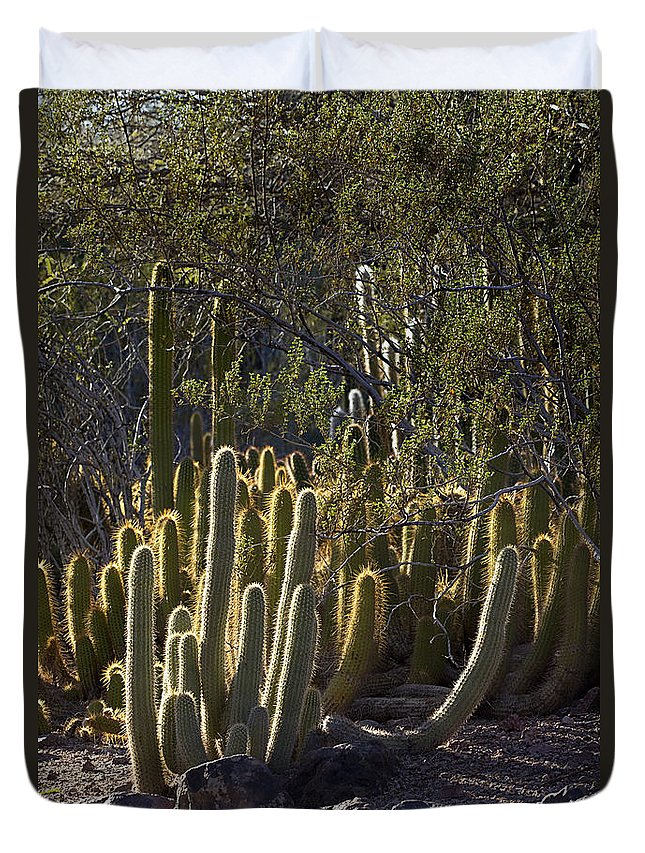 Landscape Duvet Cover featuring the photograph Reflecting The Sunshine by Phyllis Denton
