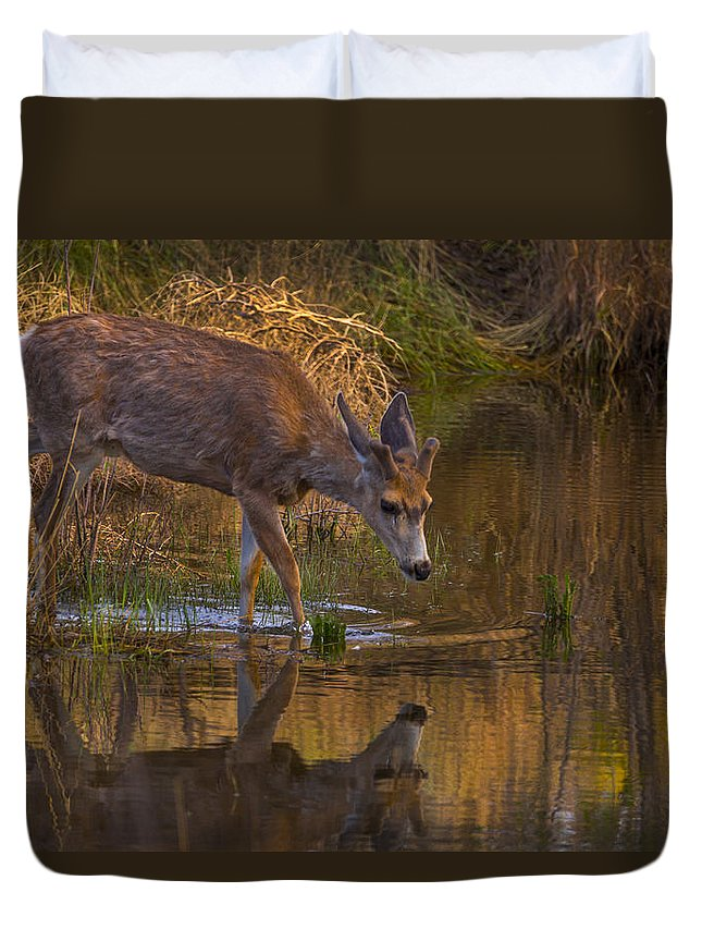 Wildlife Duvet Cover featuring the photograph Reflection In The Stream by Jeff Shumaker