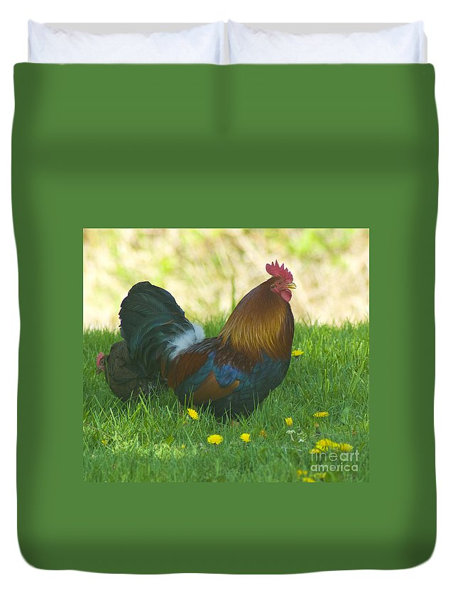 Rooster Duvet Cover featuring the photograph Regal Rooster by Louise Magno