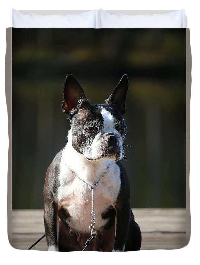 Animal Duvet Cover featuring the photograph Regal by Susan Herber
