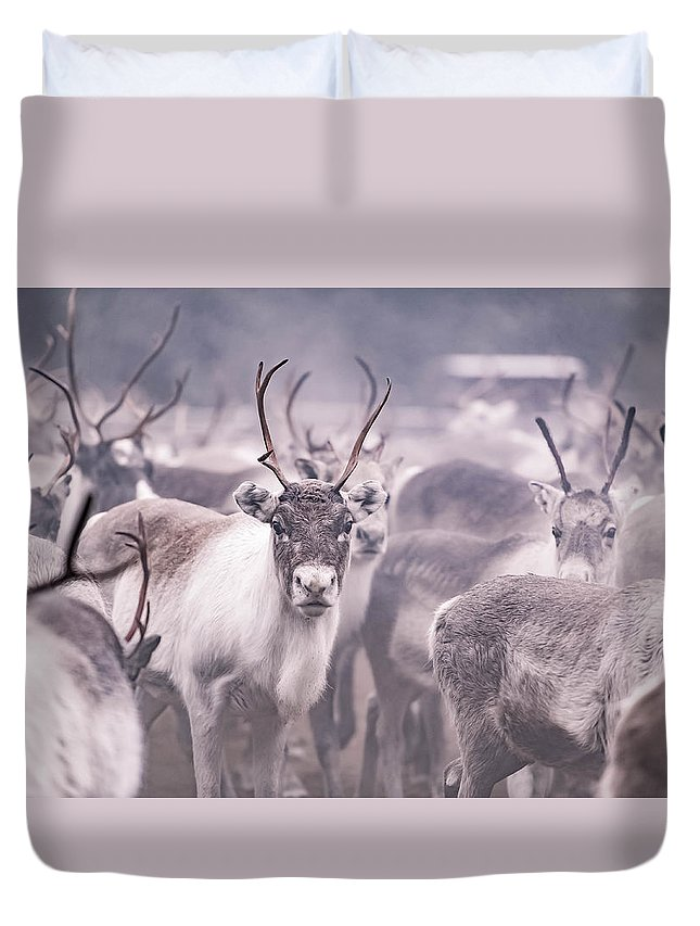 Reindeer Duvet Cover featuring the photograph Reindeers by Markus Kiili