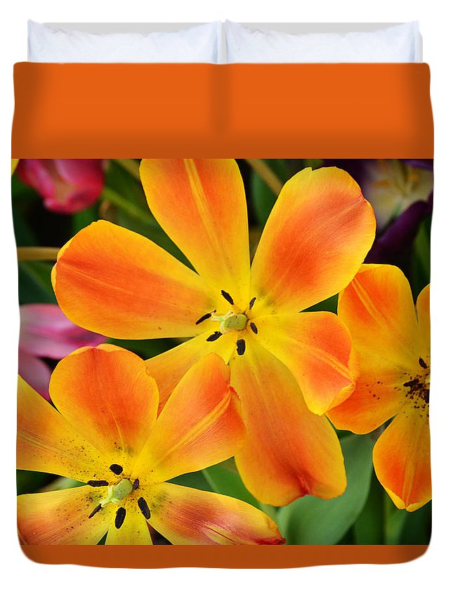 Flowers Duvet Cover featuring the photograph Relaxed Tulips by Robert Coffey