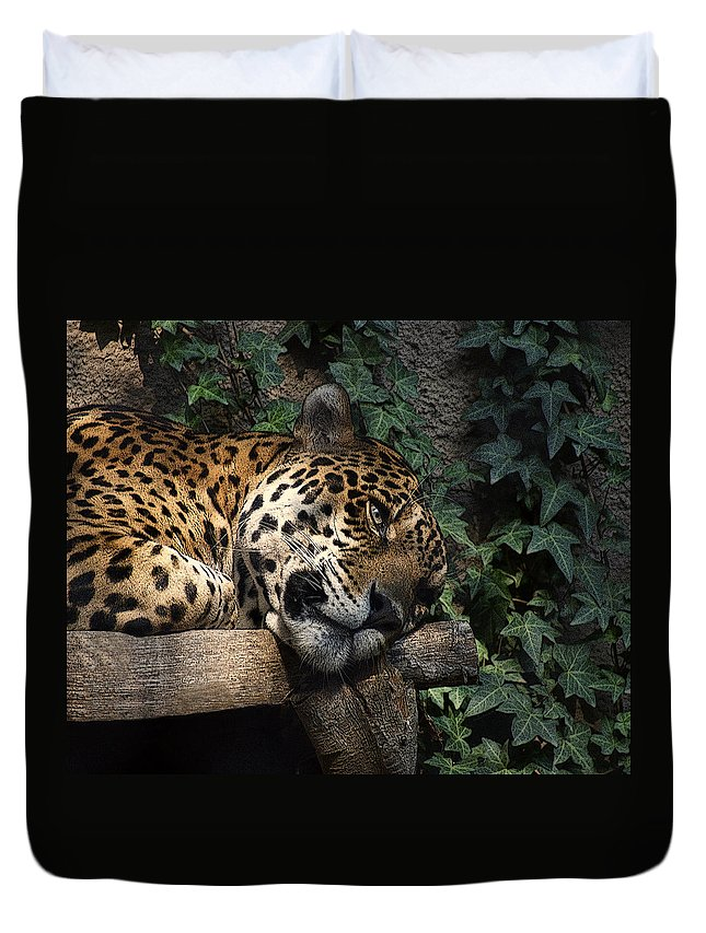 Big Cats Duvet Cover featuring the photograph Relaxing by Ernie Echols