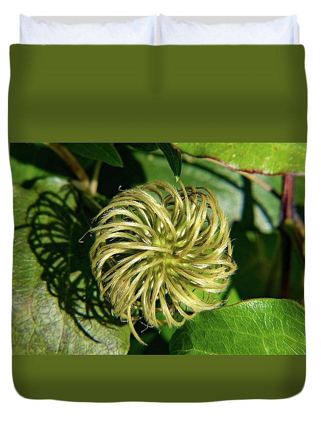 Remainder Duvet Cover featuring the photograph Remainder Of A Clematis Blossom by Douglas Barnett