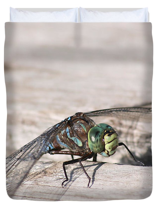 Dragonfly Nature Bug Flying Insect Wings Eyes Colorful Creature Duvet Cover featuring the photograph Rescued Dragonfly by Andrea Lawrence