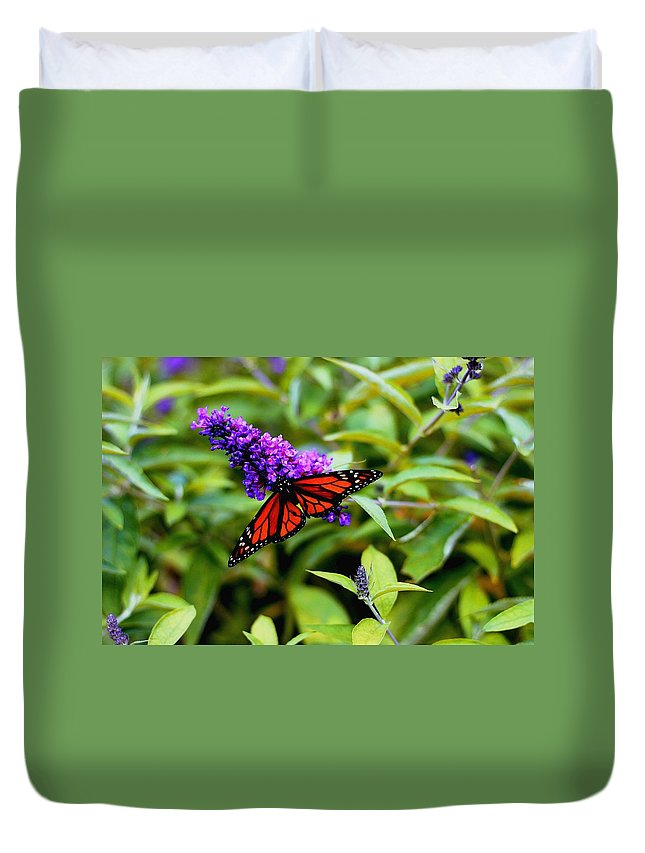 Butterfly Duvet Cover featuring the photograph Resting Butterfly 2 by Drew Werner