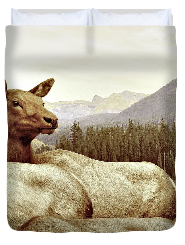 Deer Duvet Cover featuring the photograph Resting Deer by Zena Zero