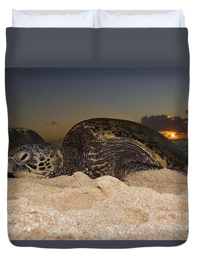 Ancient Duvet Cover featuring the photograph Resting Green Sea Turtle by Dave Fleetham - Printscapes