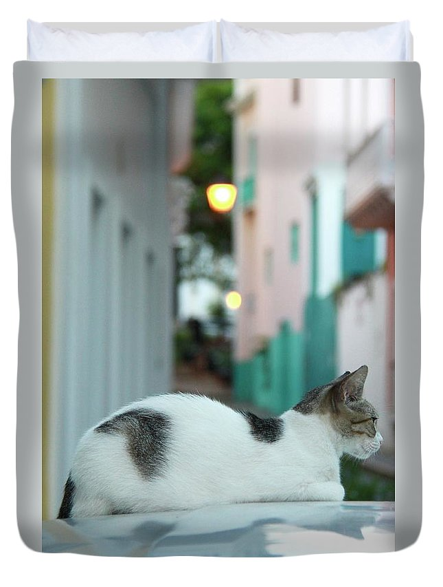 Old San Juan Duvet Cover featuring the photograph Resting Kitten by Suzanne Oesterling