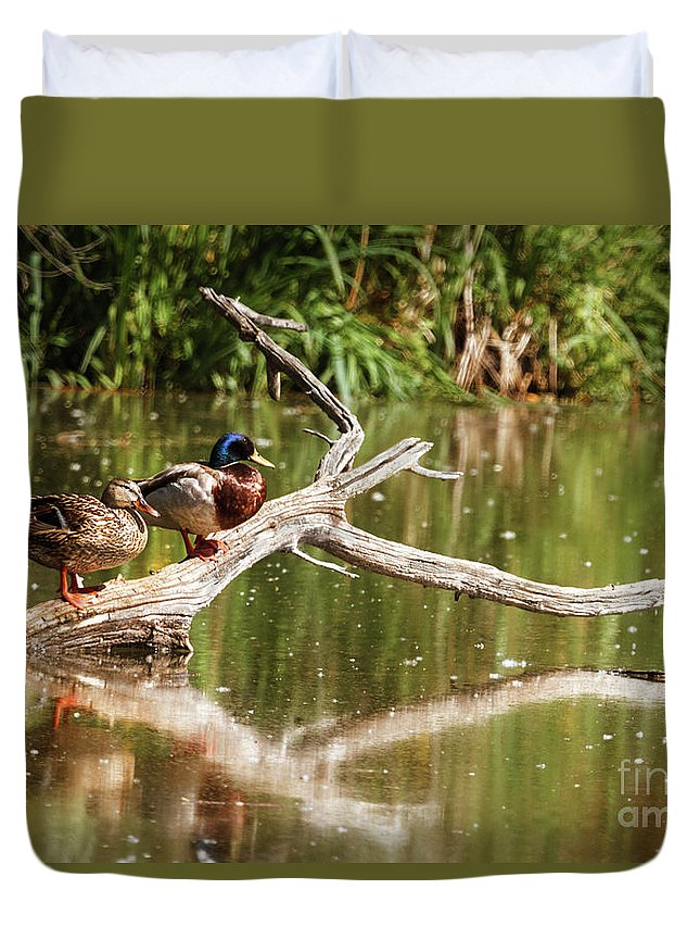 Birds Duvet Cover featuring the photograph Resting Mallards by Robert Bales