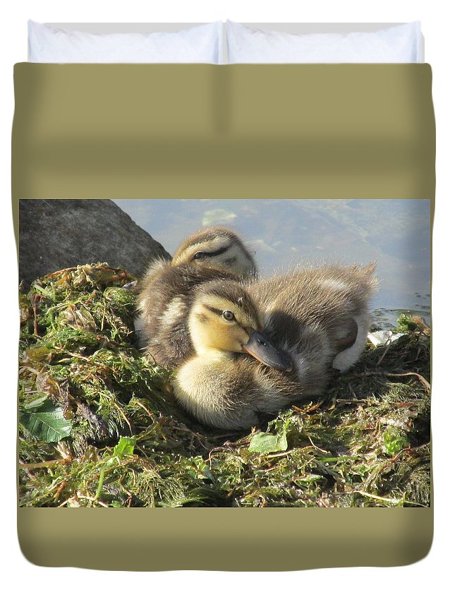 Ducklings Duvet Cover featuring the photograph Resting On The Lake Shore. by Mike Homblette