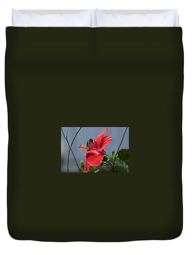 Hummingbird On A Hibiscus Duvet Cover featuring the photograph Resting Place by Garnette Boggs