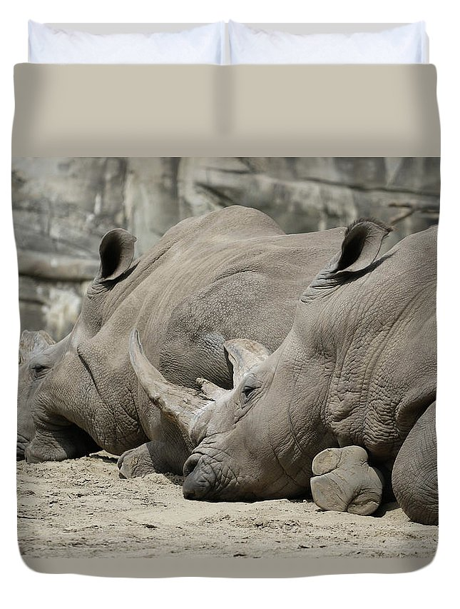 Rhinoceros Duvet Cover featuring the photograph Resting Rhinos by Norman Saagman