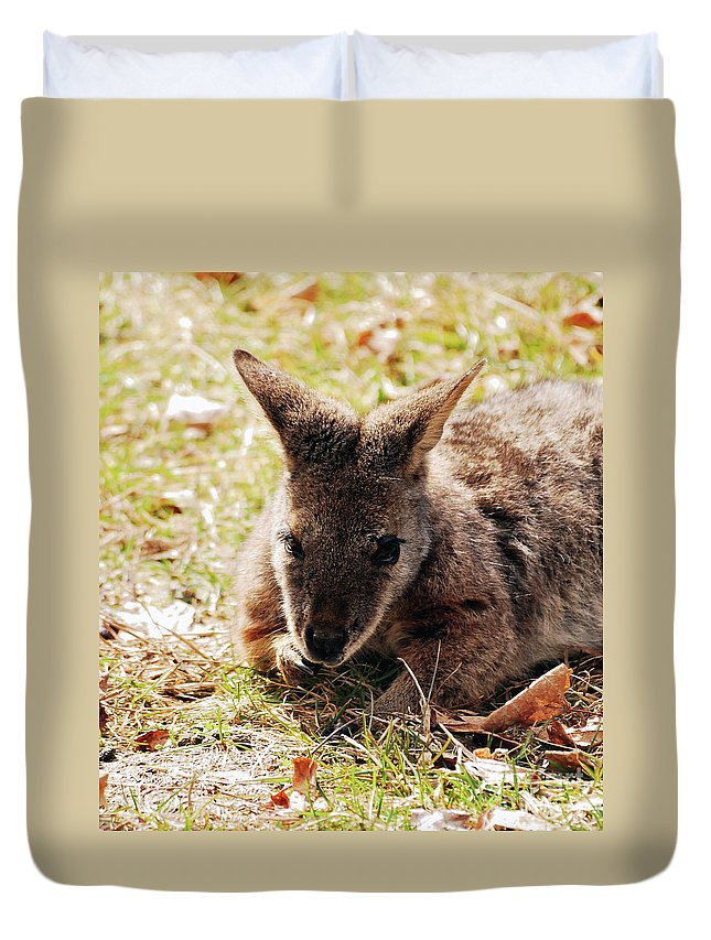Wallaby Duvet Cover featuring the photograph Resting Wallaby by Lori Tambakis