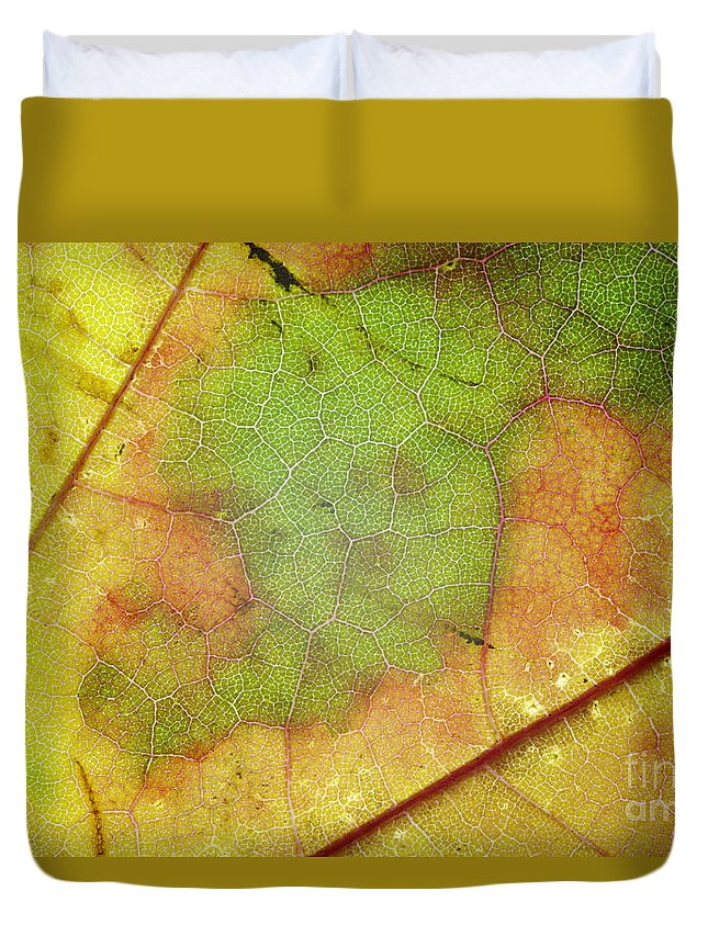 Leaf Duvet Cover featuring the photograph Ribbing by Michal Boubin