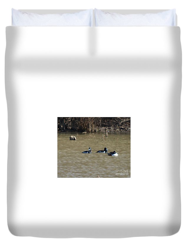 Ring Neck Duck Prints Duvet Cover featuring the photograph Ring Neck Ducks by Ruth Housley