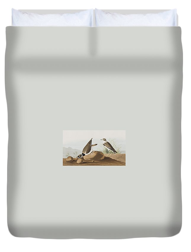 Plover Duvet Cover featuring the painting Ring Plover by John James Audubon