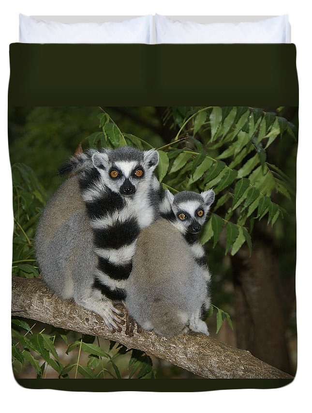 Madagascar Duvet Cover featuring the photograph Ring-tailed Lemurs by Michele Burgess