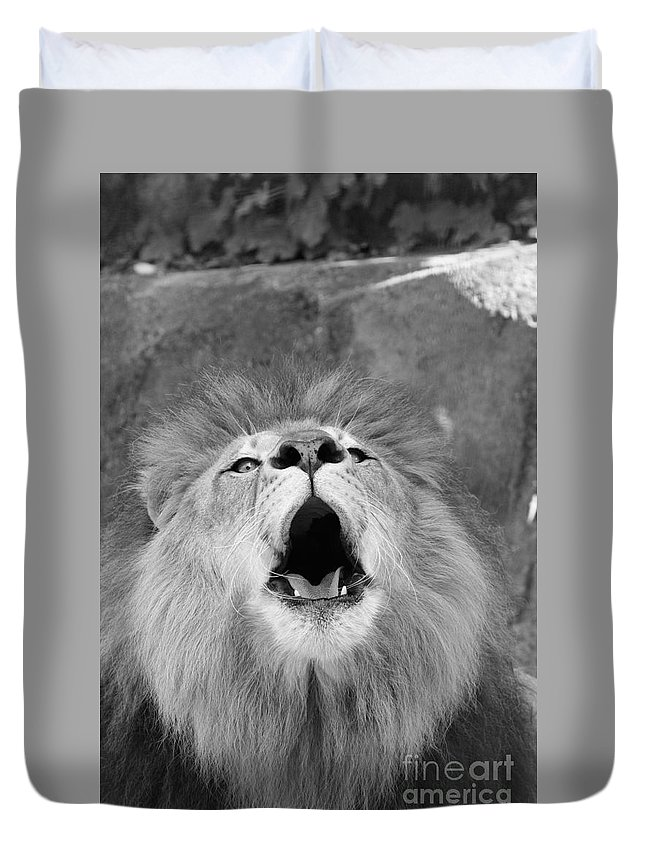 Lion Duvet Cover featuring the photograph Roar Black And White by Judy Whitton