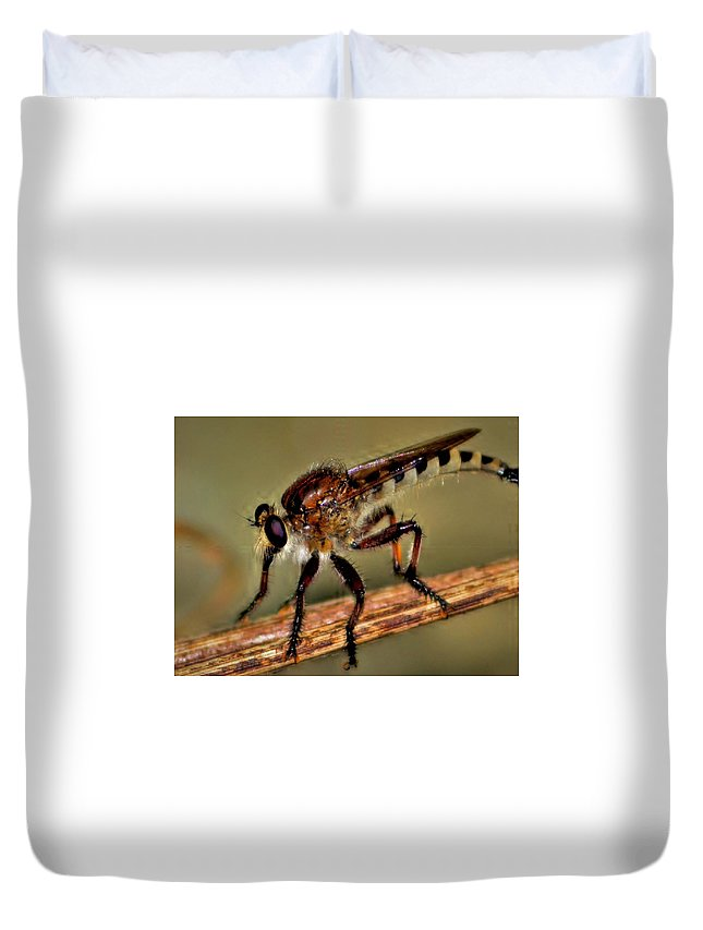 Insect Duvet Cover featuring the photograph Robber Fly by Dennis Nelson