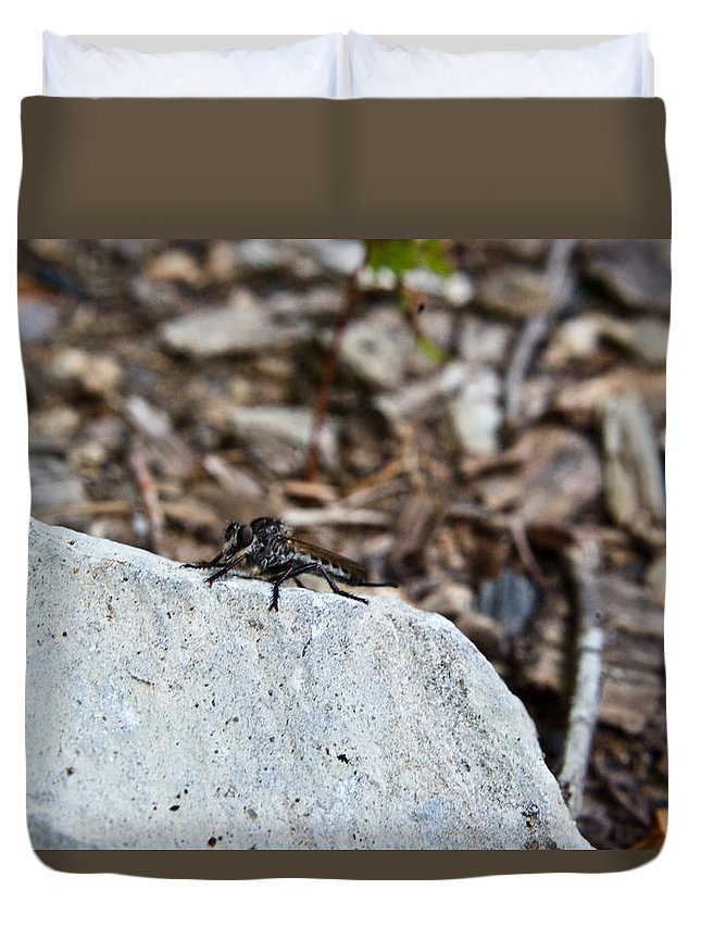 Sitting Duvet Cover featuring the photograph Robber Fly Sitting by Douglas Barnett