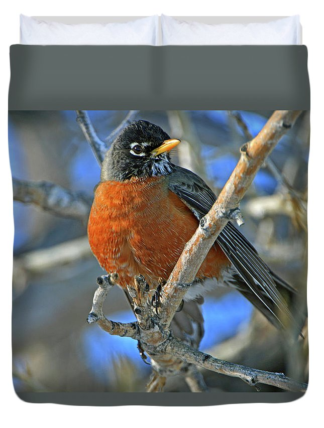 Robin Duvet Cover featuring the photograph Robin by Scott Mahon