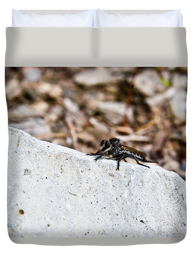 Rock Duvet Cover featuring the photograph Rock and Robber Fly by Douglas Barnett