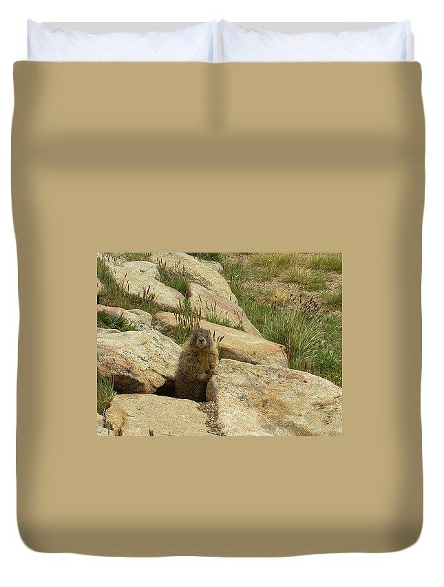 Critter Duvet Cover featuring the photograph Rock Critter by Sara Stevenson