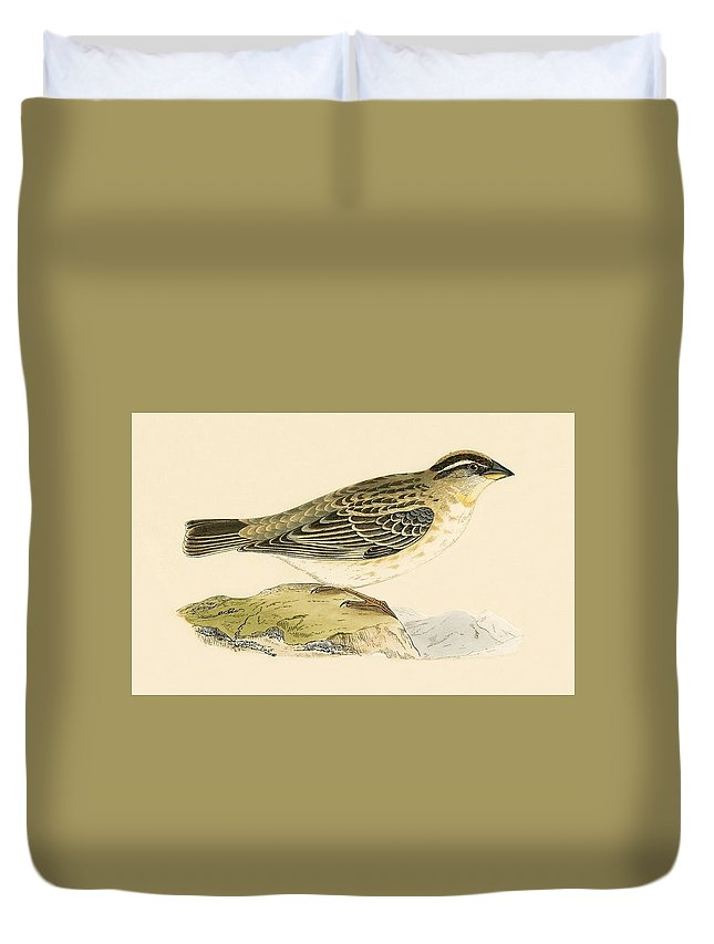 Sparrow Duvet Covers