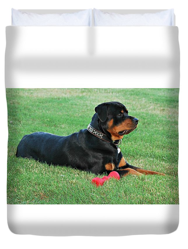 Rottweiler Duvet Cover featuring the photograph Rottweiler Portrait by Barbara Woodson