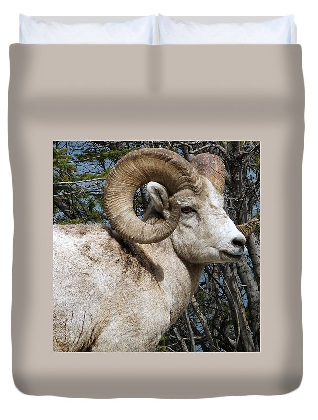 Wildlife Duvet Cover featuring the photograph Rocky Mountain Ram by Tiffany Vest