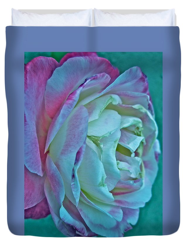 Photograph Of White And Pink Rose Duvet Cover featuring the photograph Romancing The Restless by Gwyn Newcombe