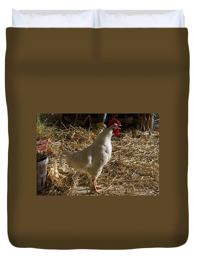 Rooster Crow Crowing Chicken Farm Straw White Red Rural Duvet Cover featuring the photograph Rooster Crowing by Andrei Shliakhau