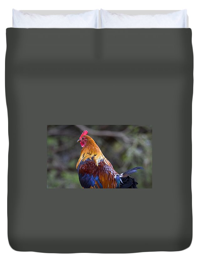 Rooster Duvet Cover featuring the photograph Rooster Rooster by Mike Dawson